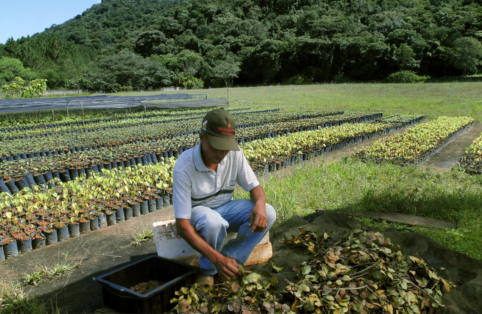 ecosia-tree-planting-brazil-atlantic-forest-02