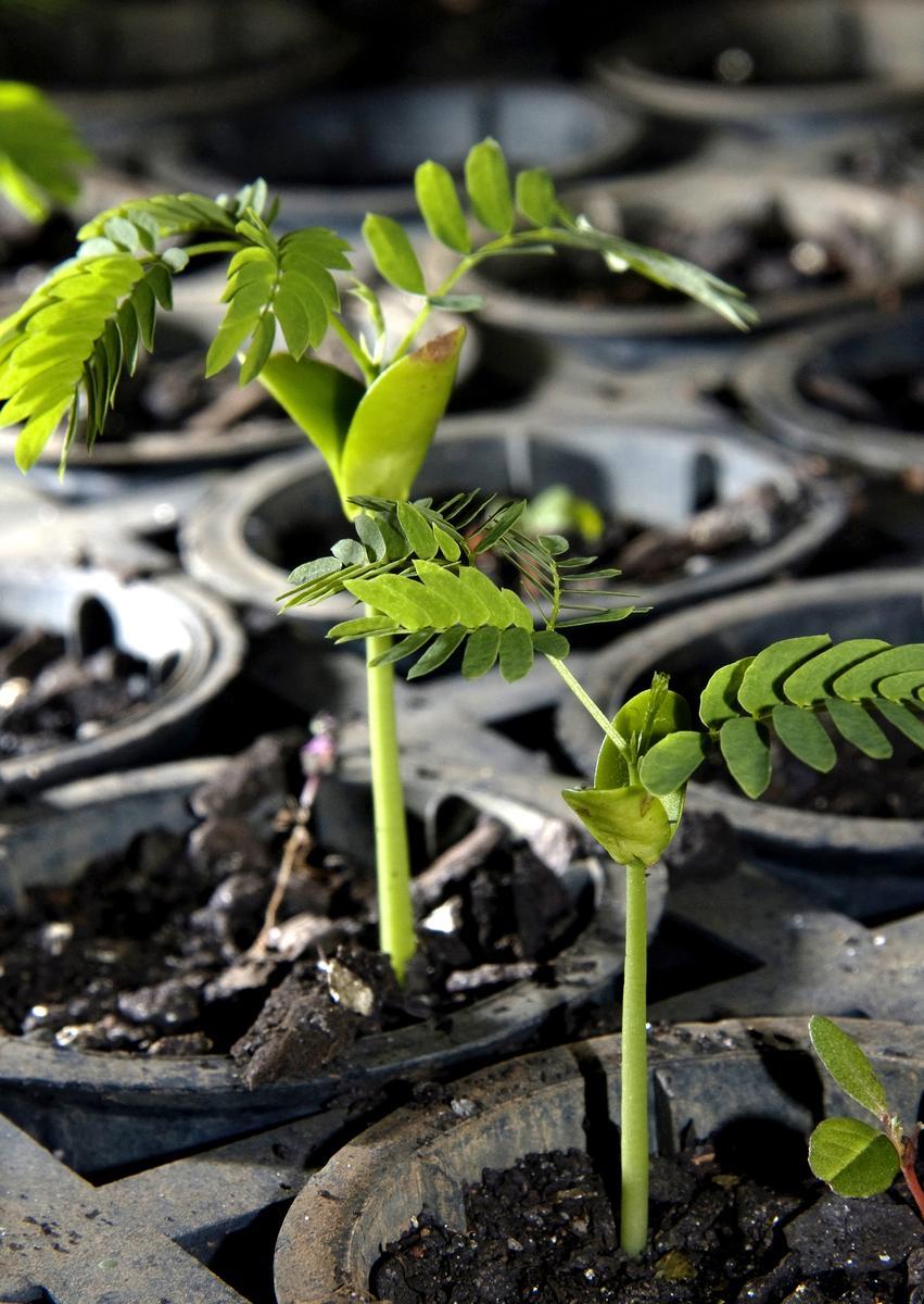 ecosia-tree-planting-brazil-atlantic-forest-03