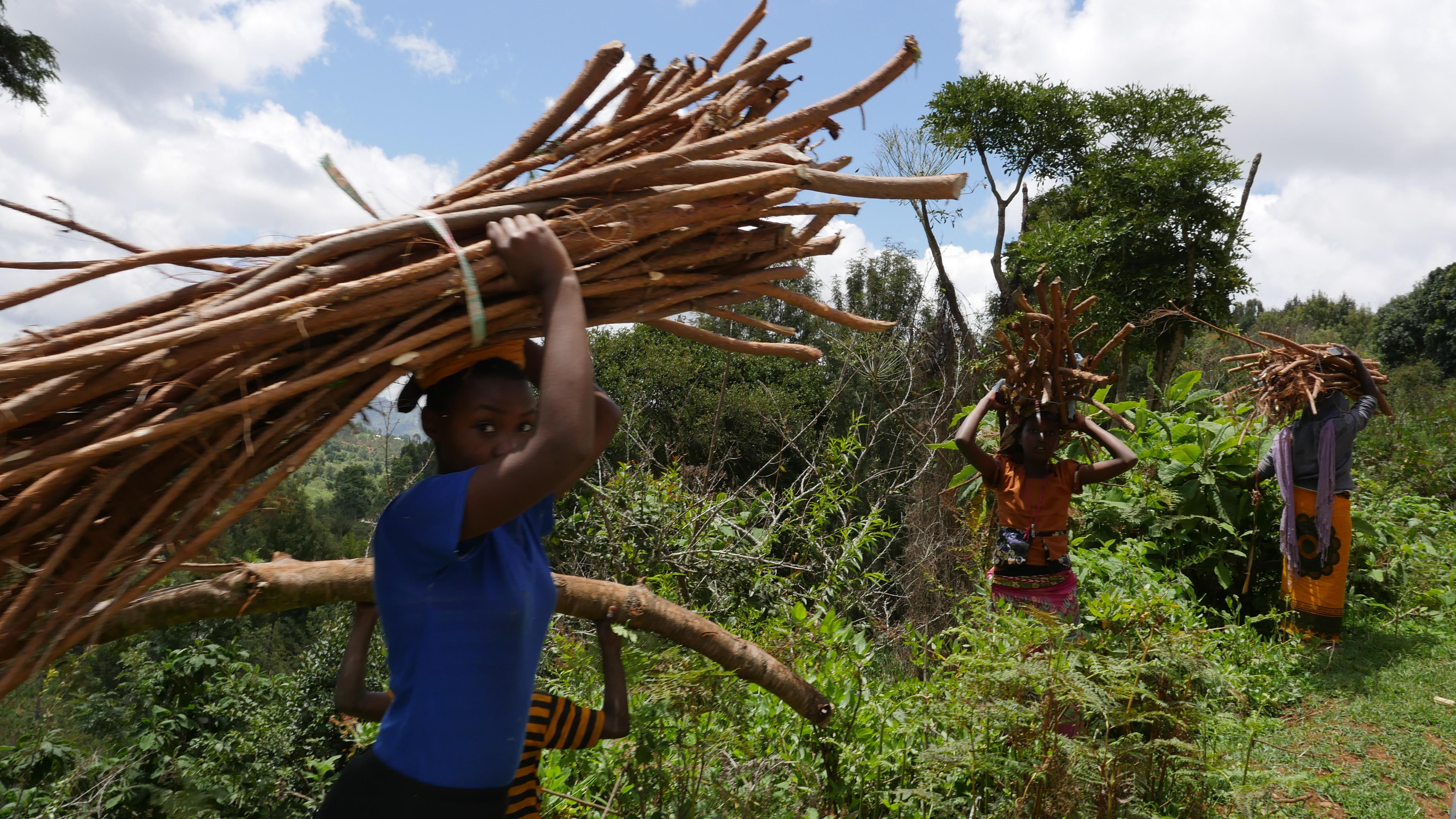 Tanzania-2017-Ecosia--14-of-69-