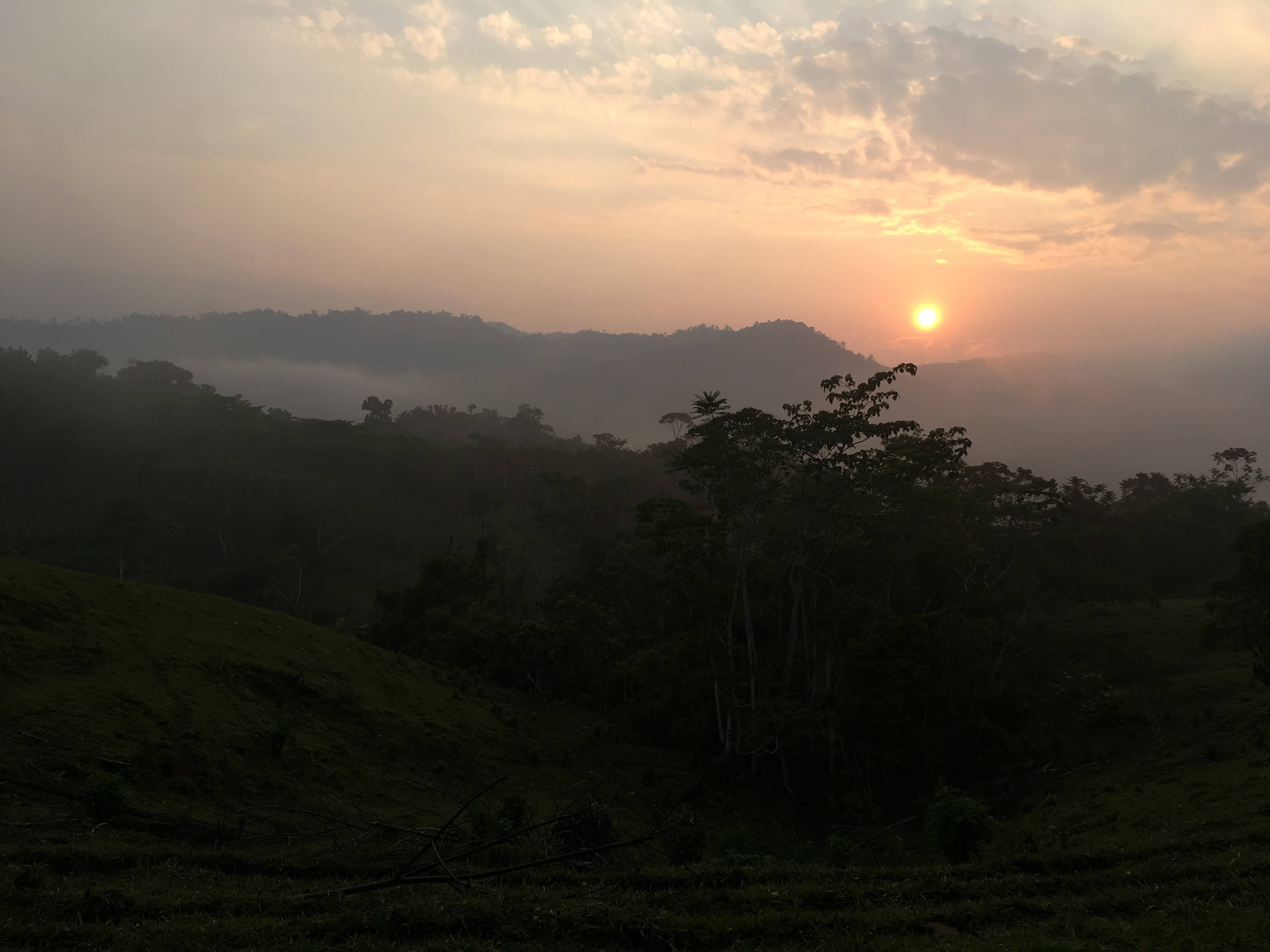 Trees, community and how Peru's farmers fight deforestation