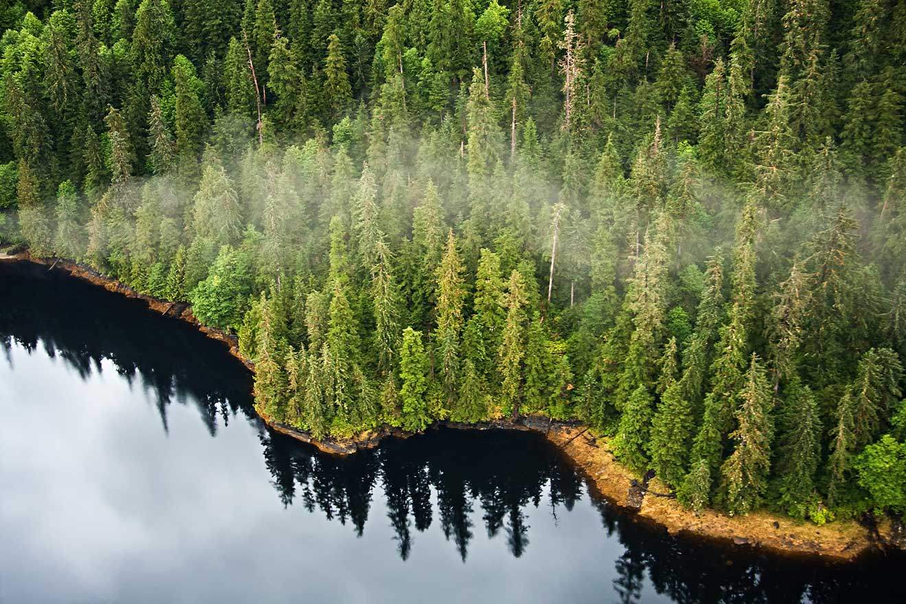 The Tongass Forest
